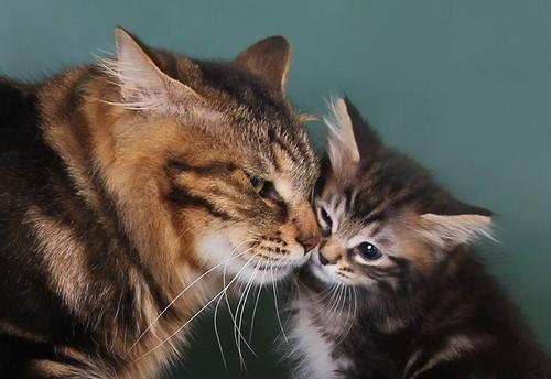 мать и котенок