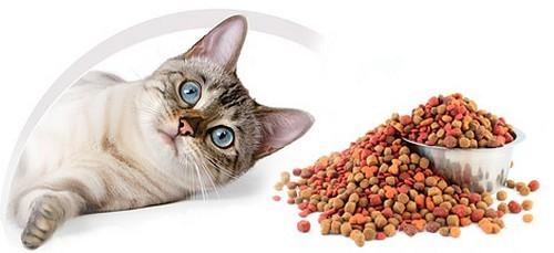 кот и сухой корм
