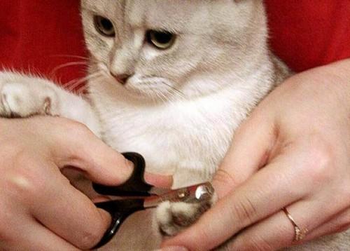 когтерезка для кошек фото
