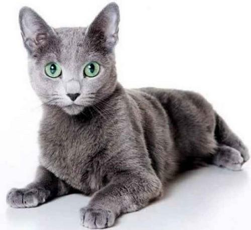 Фото кошки 1,2 года