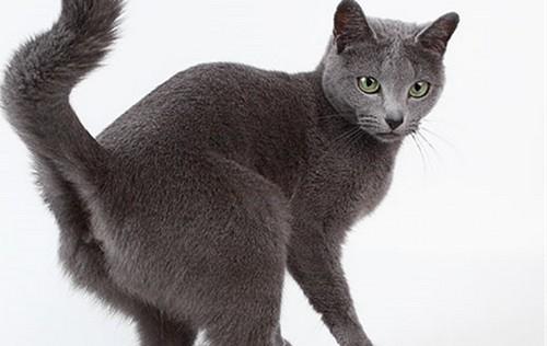 Фото взрослого кота