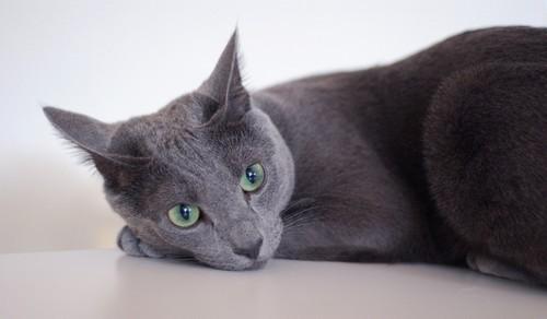Фото спокойный кот
