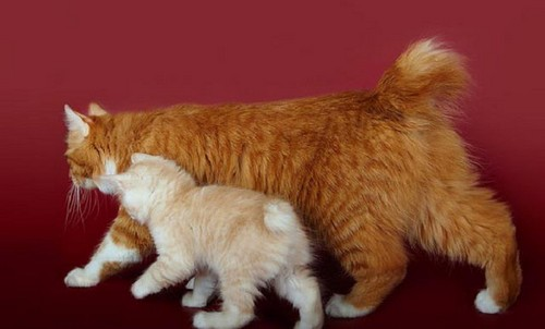 фото кошек с курил