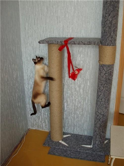 фото дом для кота своими руками и лазелки