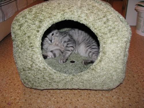 дом из ковролина