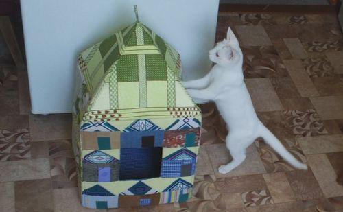 дом кошке