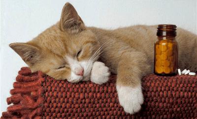 кот и таблетки