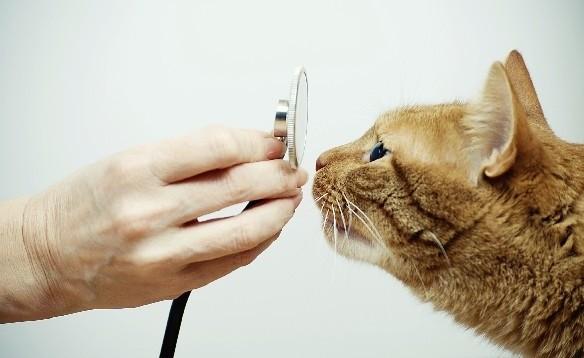 кошачий врач