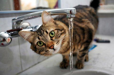 вода для кота