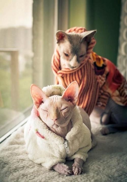 кошки одеты