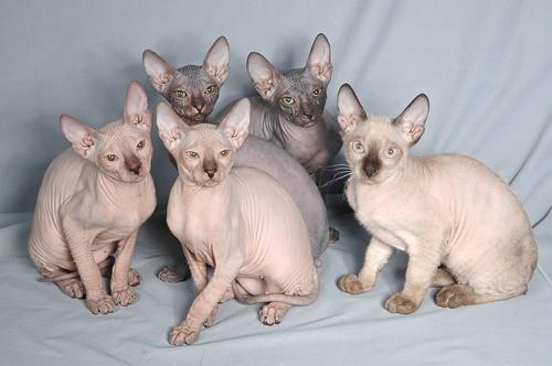 много кошек на фото