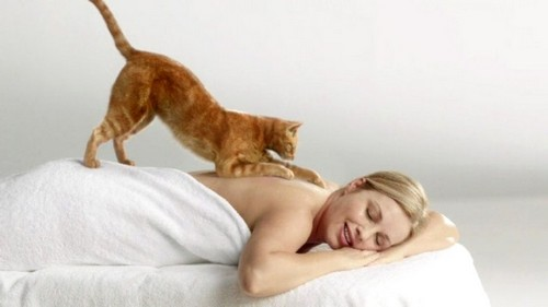 кошачий массаж