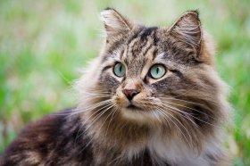 У кота горячие уши профилактика