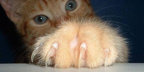 пальци