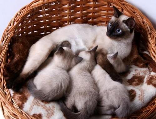 кошка с котятамм