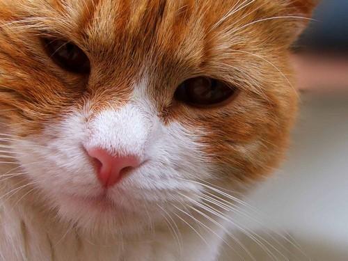 осмотр носа кошки