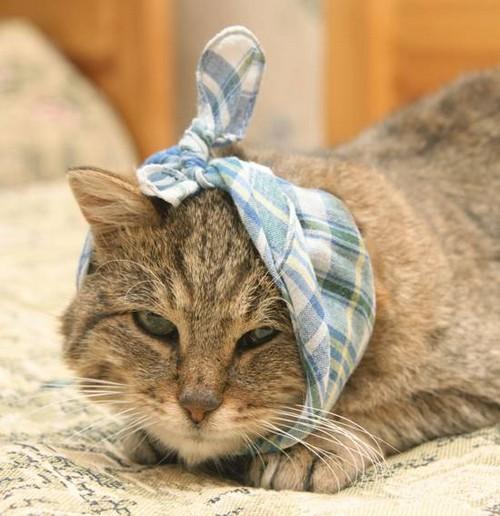 У кота горячие уши