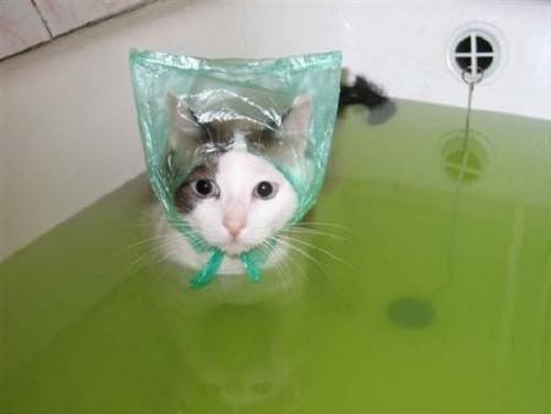 Как моют кошку