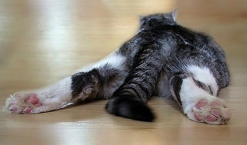 Уход за кастрированным котенком