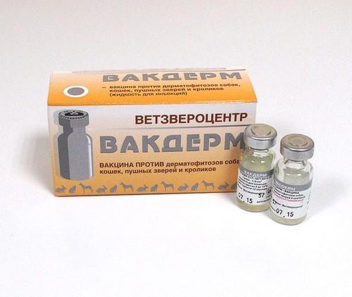 Вакдерм - вакцина для кошек