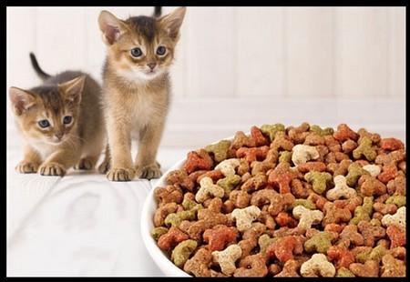 Котятки и миска с кормом