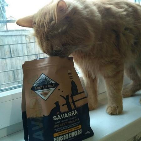 Кошка и упаковка корма