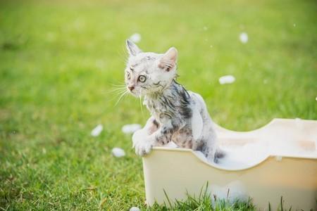 Котенок в средстве от блох