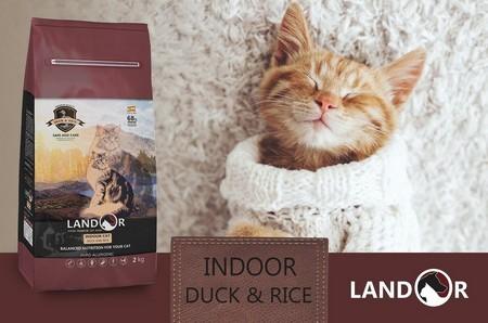 Ландор для котят