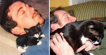 Как вырос котенок