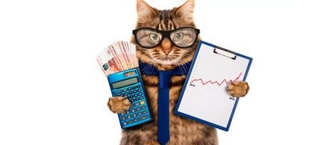 Где купить корм для кошек