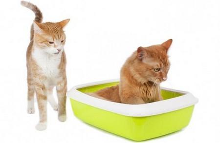 Котятки в лотке
