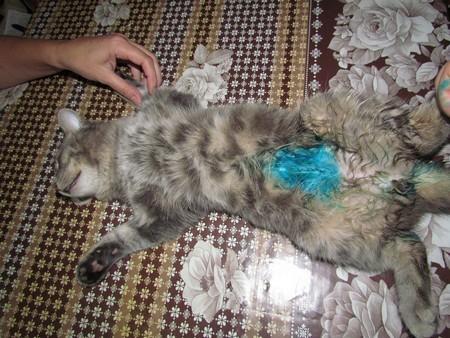 Реабилитация кота после операции