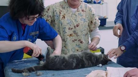 подготовка кота к операции