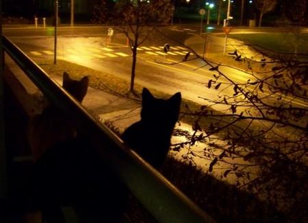 Котики на улице