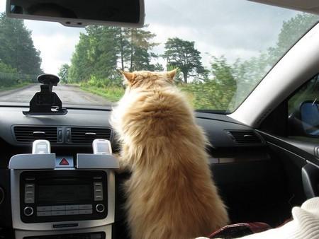 Без стресса при переезде кота в машине