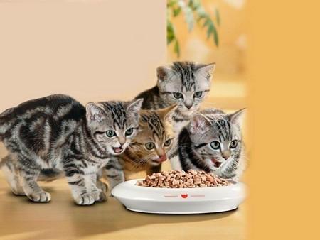 Котятки едят