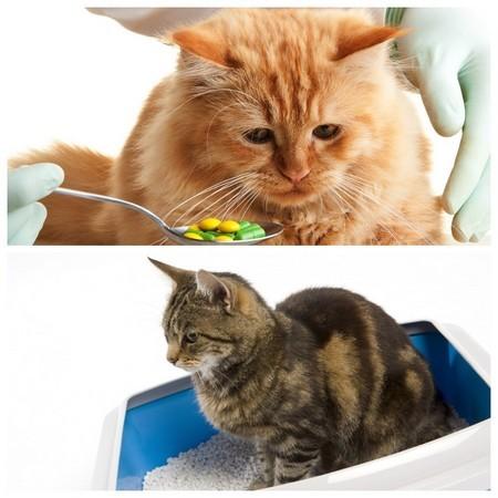 Слабительные препараты для котов