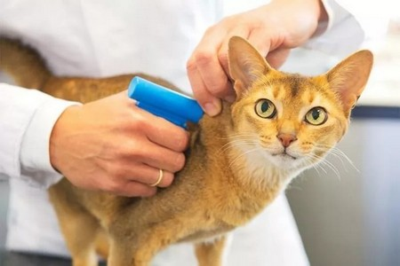 Имплантация чипа кошке