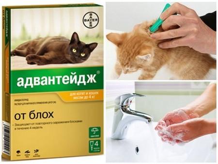 Использование капель от блох у кошки