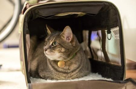 Кошке в переноске в машине