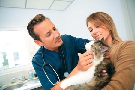 Мнение ветеринара