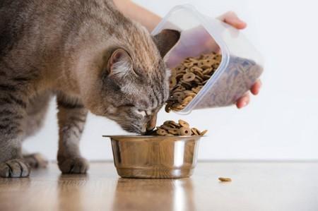 Сколько раз в день кормить кошечку