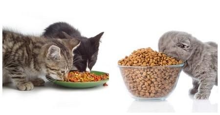 Котики обедают