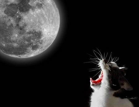 Кот орет на лучу