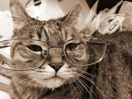 Старелая кошка