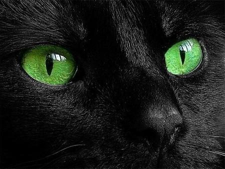 Мистический подход почему нельзя смотреть кошке в глаза