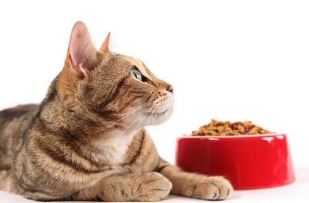 Кормление кошек при панкреатите