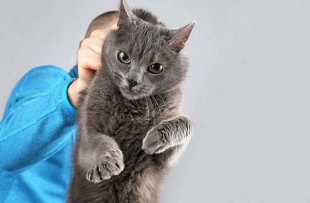 Наказание кошки