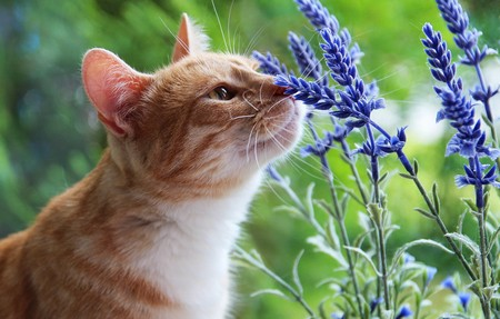 Запахи каких растений не любят кошки