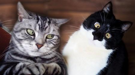 Можно ли долго смотреть кошке в глаза: реалистический подход